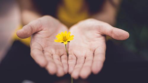 flor_amarilla_entre_las_manos